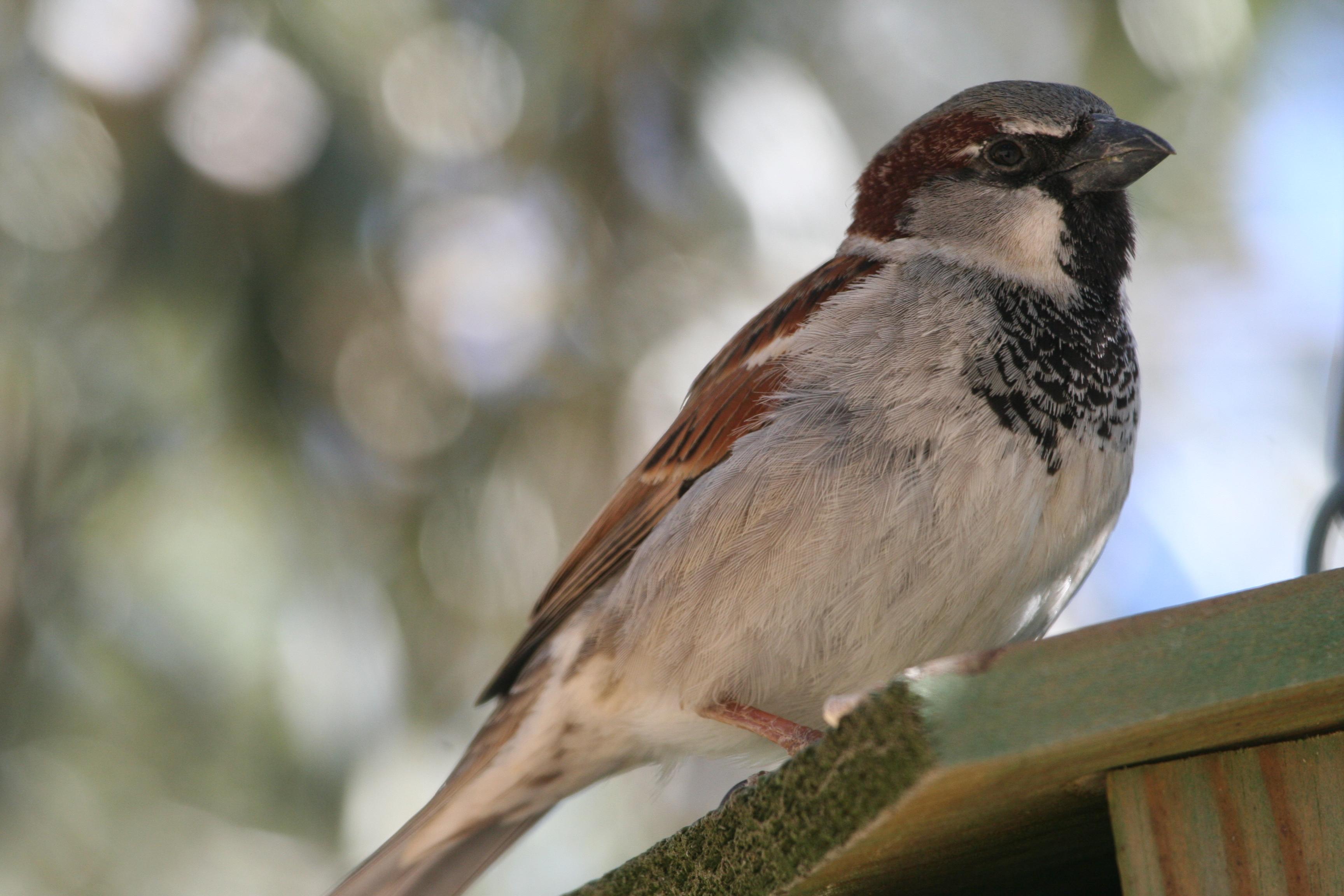 Finca Cantaros   San Vito Bird Club